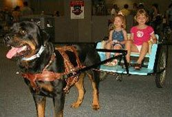 Carting Rottweiler for Queensland at the Pet Expo 2003