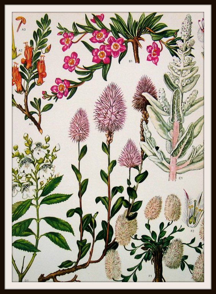 Vintage Botanical Image Art Print | Pinterest