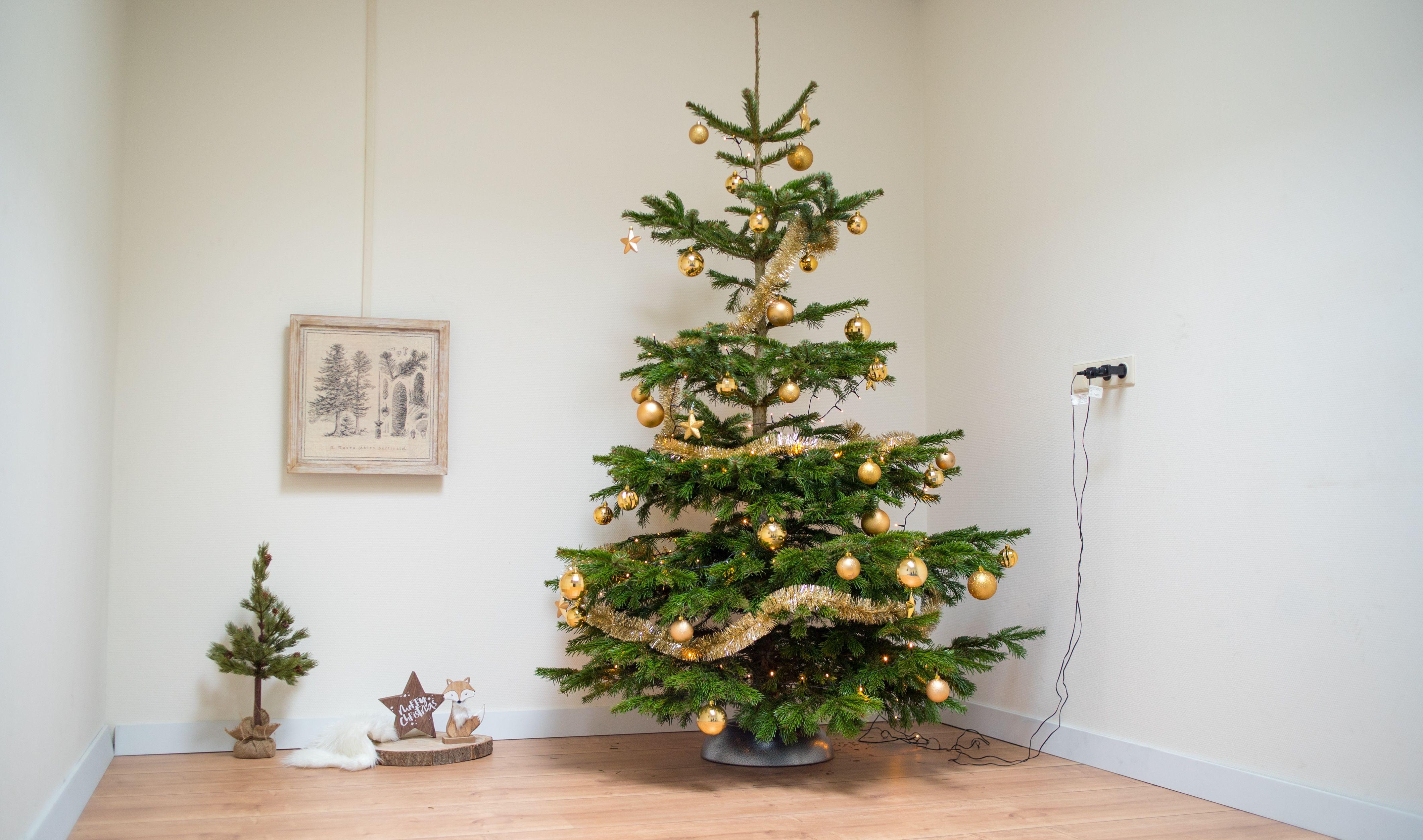 Echte Nordman Kerstboom Met Gouden Versiering Kerstboom Versieringen Mooie Kerstbomen Kerstboom