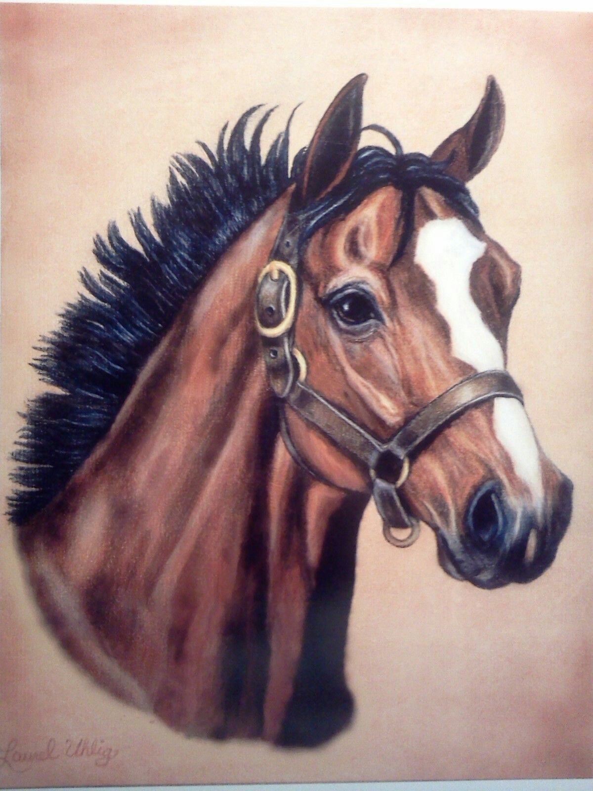 Thoroughbred Horse In Colored Pencil By Laurel Uhlig Horse Art Colored Pencil Artwork Horse Portrait