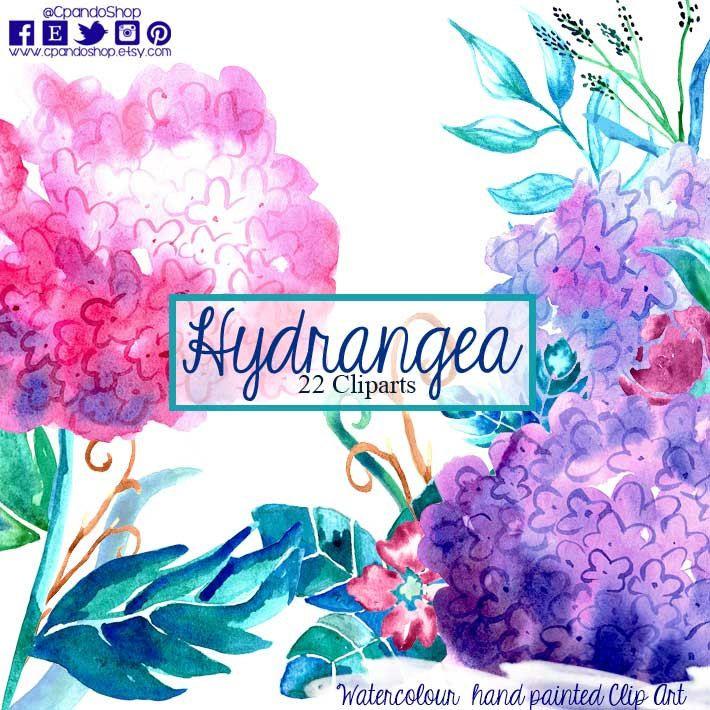 Floral elements,hydrangea, watercolor flowers, watercolour