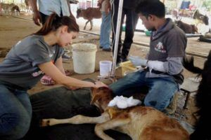 Anuska Sharma Doing Campaigning For Pet Animals Anuskasharma Anushka Sharma Animals Upcoming Movies