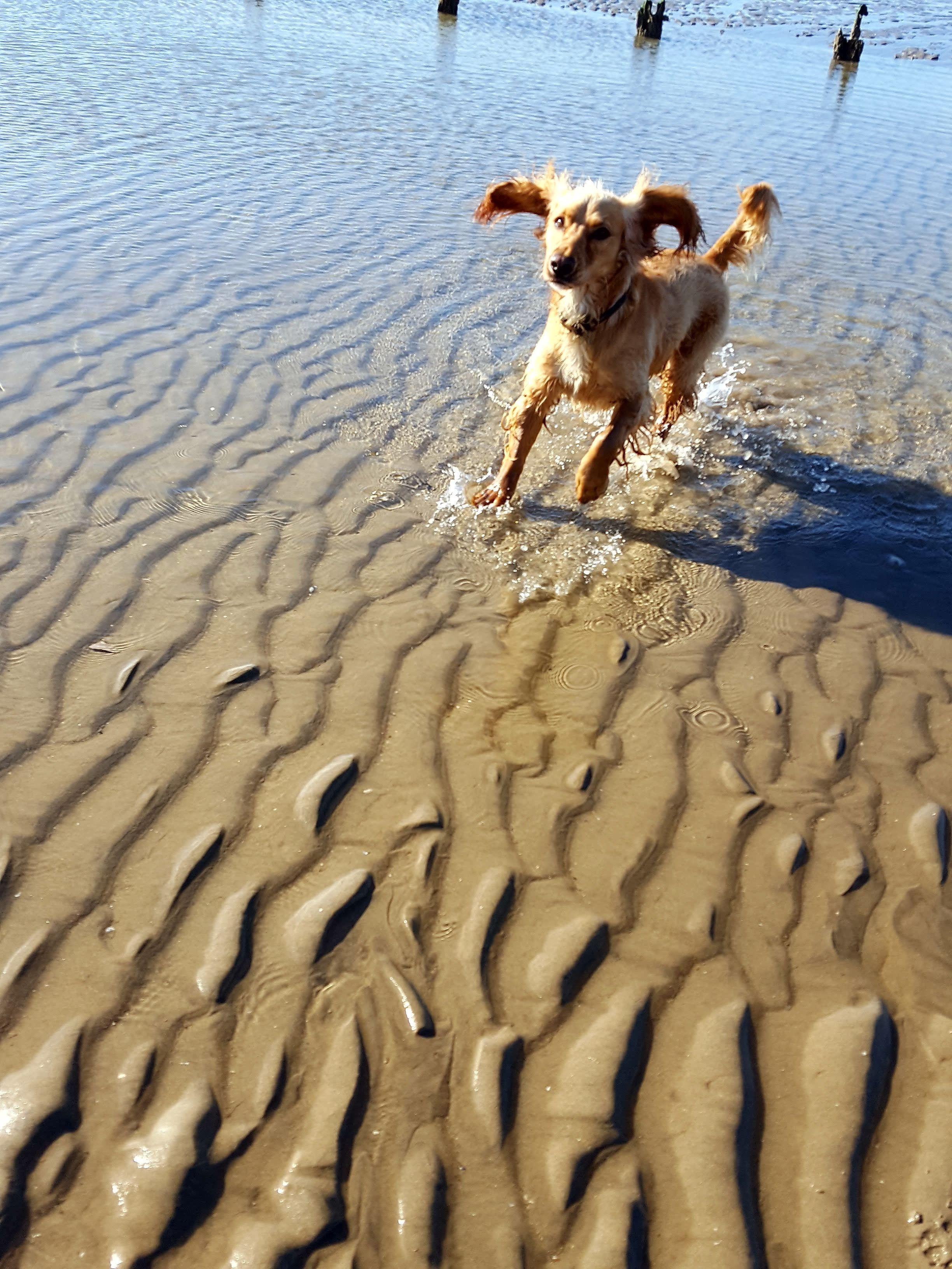 Milton Dog walking Hastings, St Leonards Www