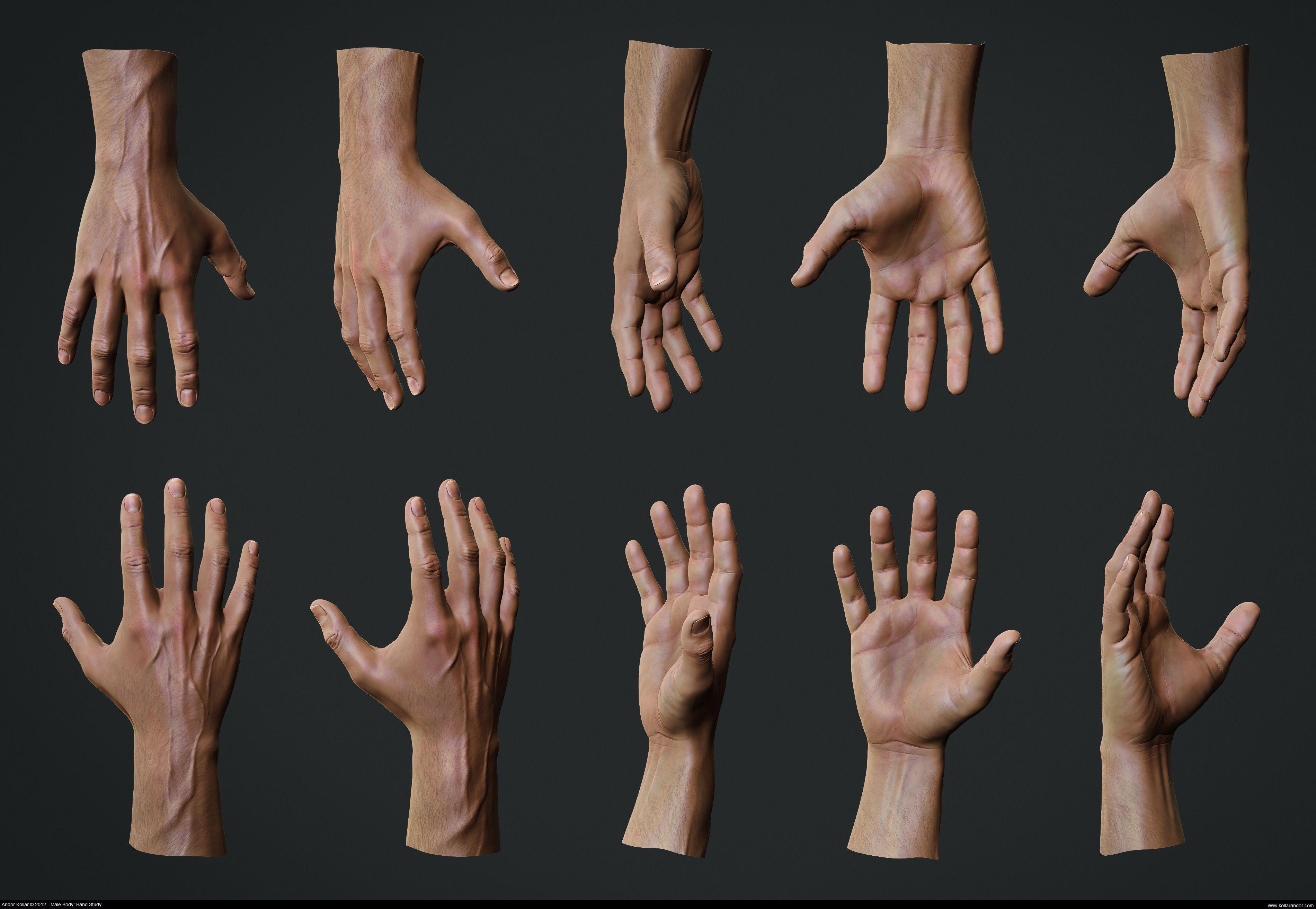 andorkollar_hands2 (3800×2625)   human anatomy   pinterest, Muscles