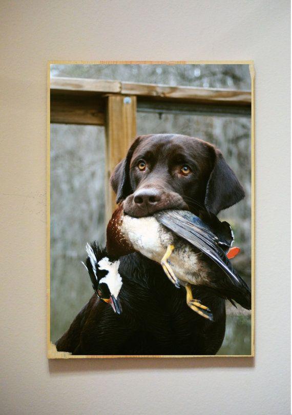 Coy's wood duck by KBphotographyandart on Etsy, $51.00