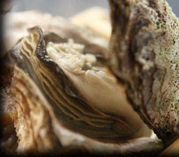 丹後半島の美味旬彩の数々 おしゃれまとめの人気アイデア Pinterest Staff 炭平 お料理 海の幸 料理