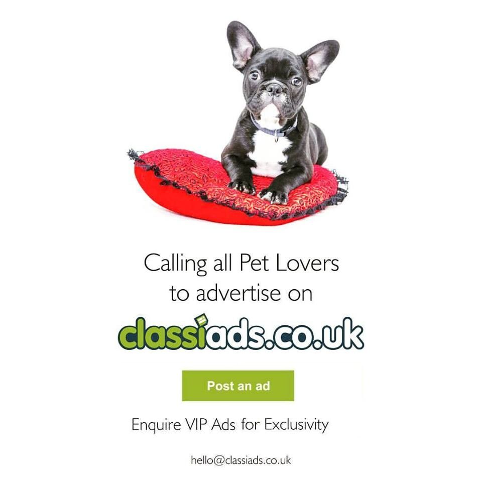 Calling all Pet Lovers to Advertise on Classiads.co.uk