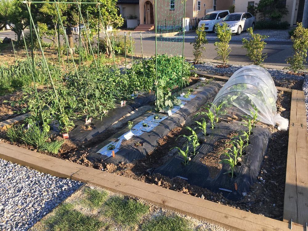 庭の風景の投稿画像 By まさまささん 枕木と夏野菜と家庭菜園 2017月