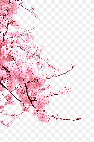Red Flowers Cherry Blossom Cerasus Cherry Blossoms Branch Sticker Twig Png Flower Illustration Blue Flower Painting Pink Flowers Background