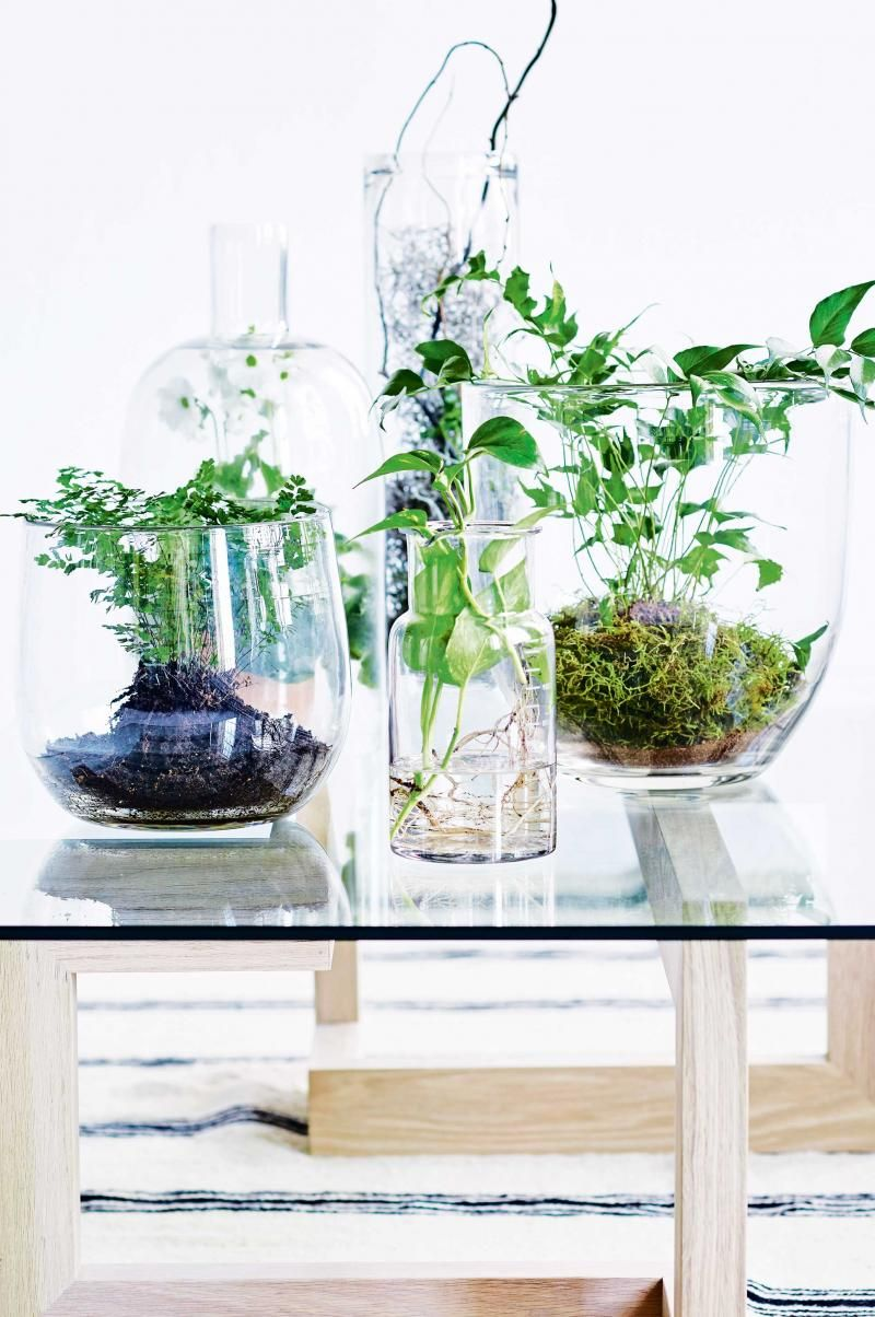 Coffee table indoor plants mar16 grow pinterest indoor coffee table indoor plants mar16 geotapseo Gallery