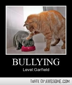 Bullying Level Garfield Funny Cat Videos Cats Bad Cats