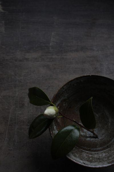 """Solitude"" | yama-boto tumblr | black | flower bud | white | green | composition | textures"