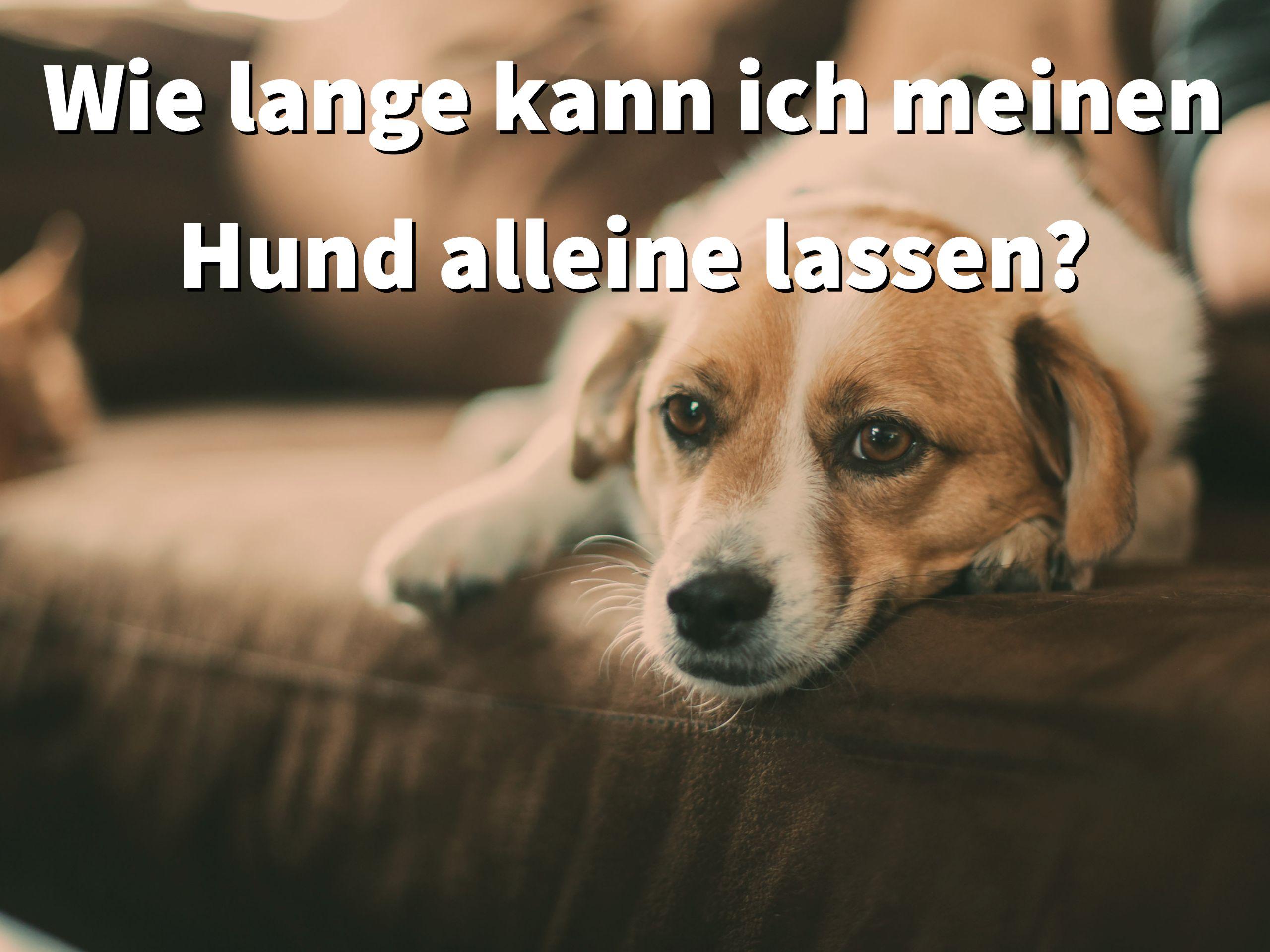 Wie Lange Kann Ich Meinen Hund Alleine Lassen Hunde Hunde