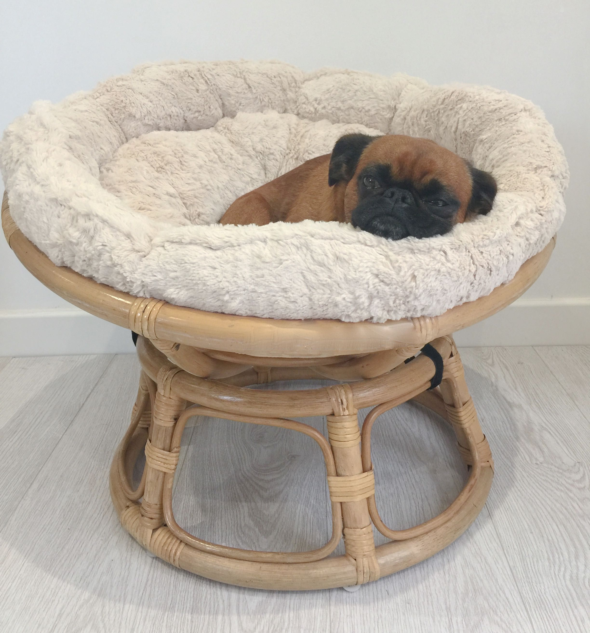 Mini Papasan chair for pets...its a Petasan This is our