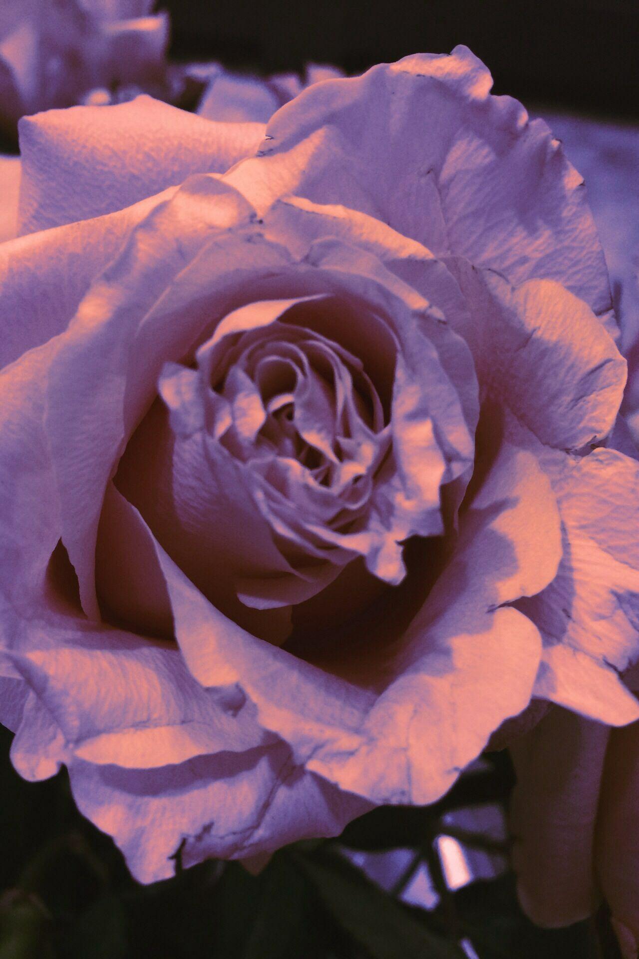 ...la ricerca del materiale e' al centro del mio lavoro....cosa ne pensate di questa variante di colore? Alessandro Tosetti www.tosettisposa.it Www.alessandrotosetti.com #abitidasposa #wedding #weddingdress #tosetti #tosettisposa #nozze #bride #alessandrotosetti