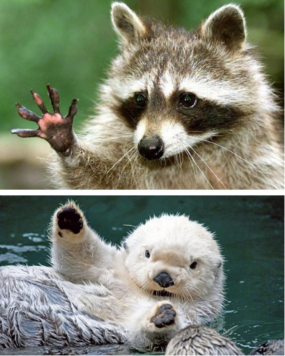 Animals Waving Hello to You [boredpanda] Previously