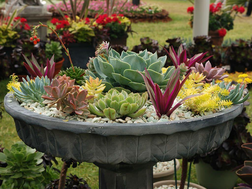 26 Best Succulent Garden Ideas Around The World | Succulents ...