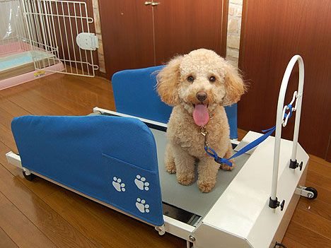 Doggy Treadmill For Your Mutt Dog Treadmill Indoor Dog Park