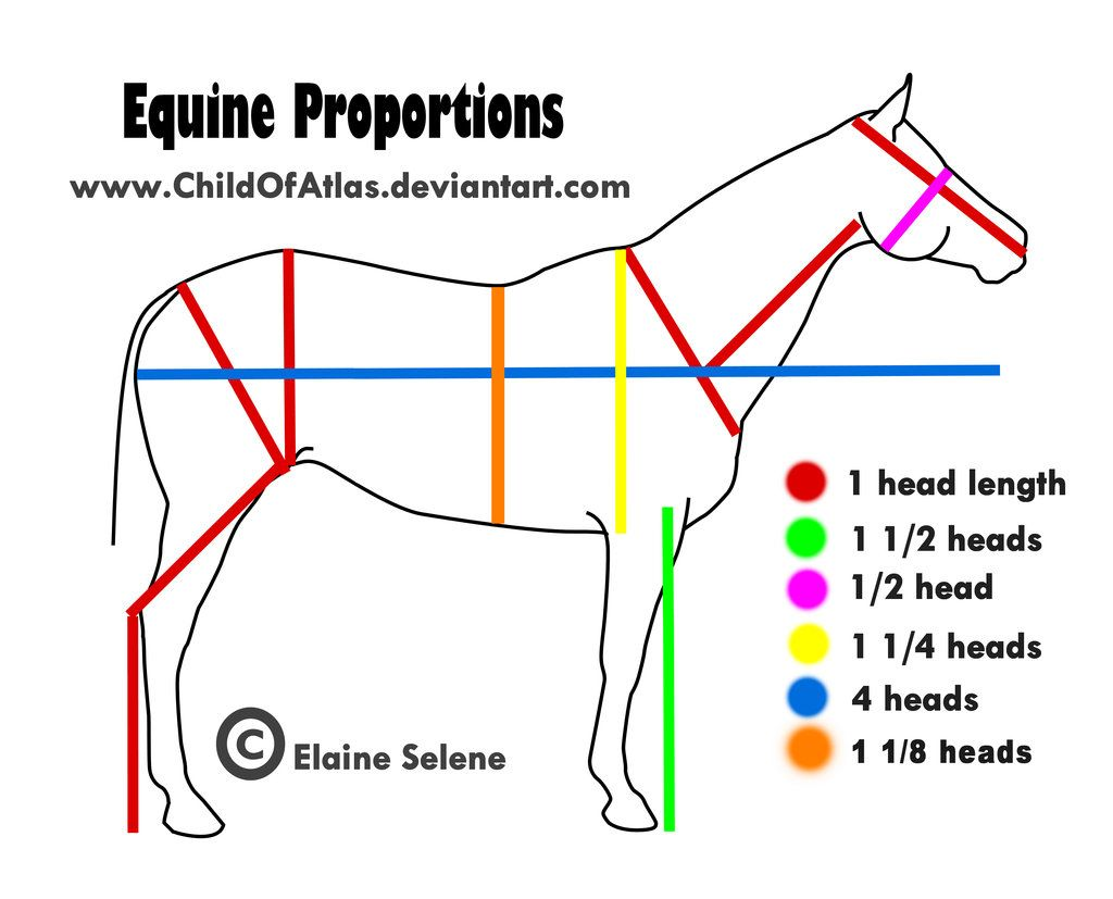 Artist Refs Equine Proportions By Elaineselenestock