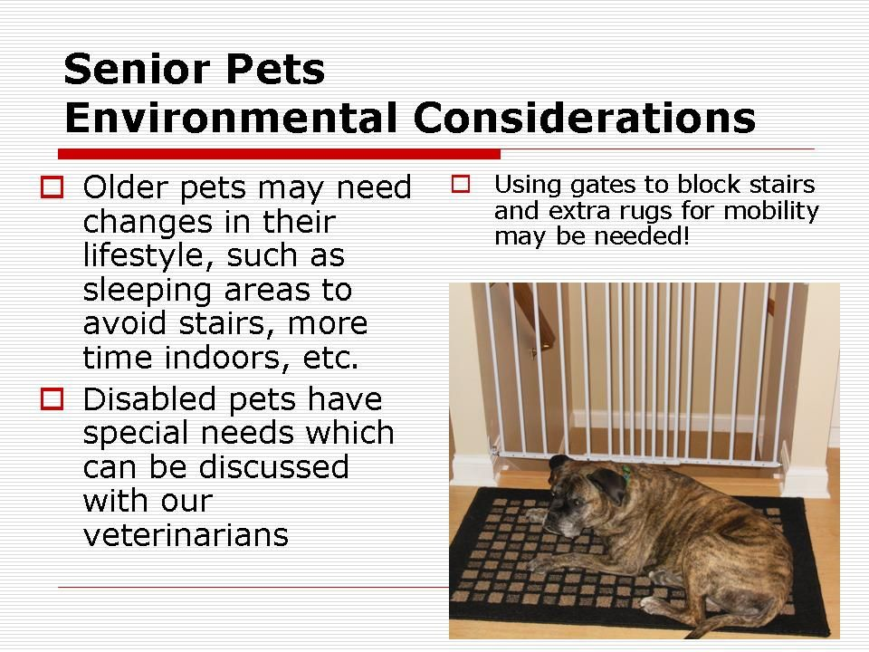 How Can You Help Your Senior Pet Get Along Better In Its Environment Seniorpet Seniorpethelp Can You Help Pets Seniors