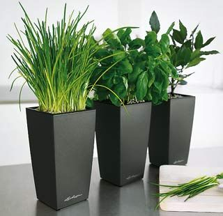 Lechuza Mini Cubi | Self Watering Planter In Charcoal   Indoor Plants ( Kitchen