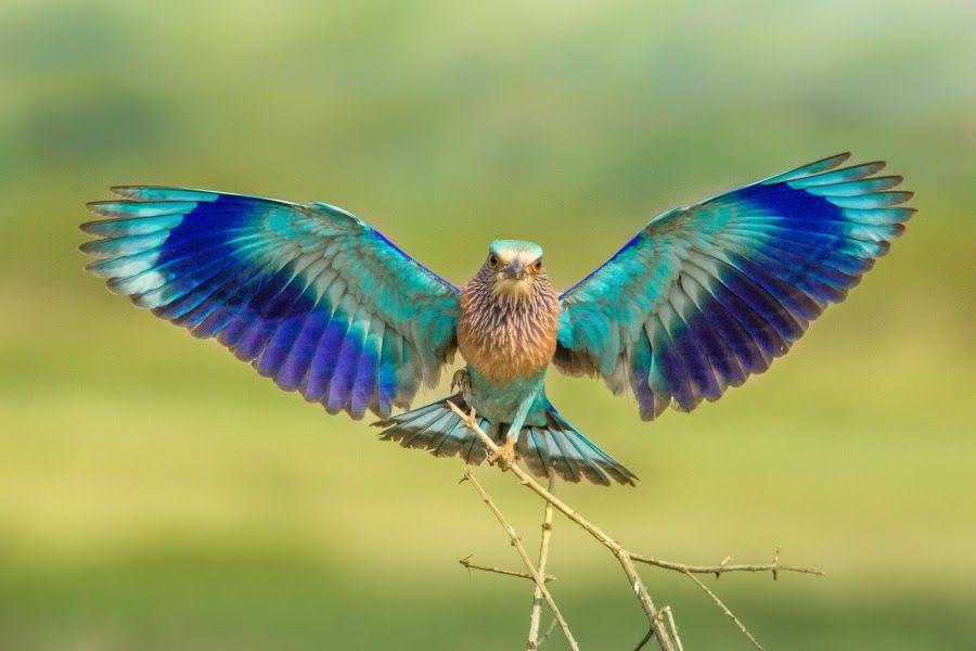 крыло птицы фотографии исполняет