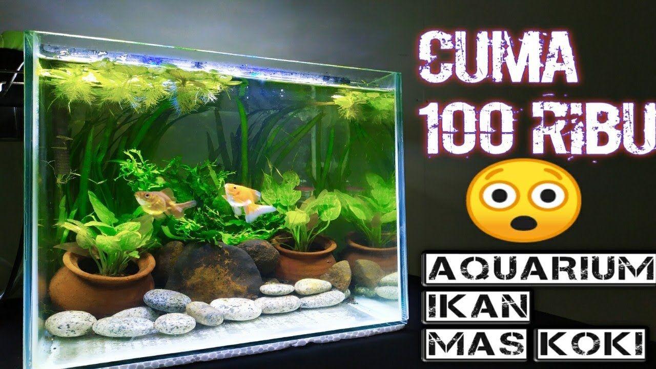 Aquariums Membuat Aquarium Ikan Mos Koki Murah Tapi Mewah In 2020 Aquarium