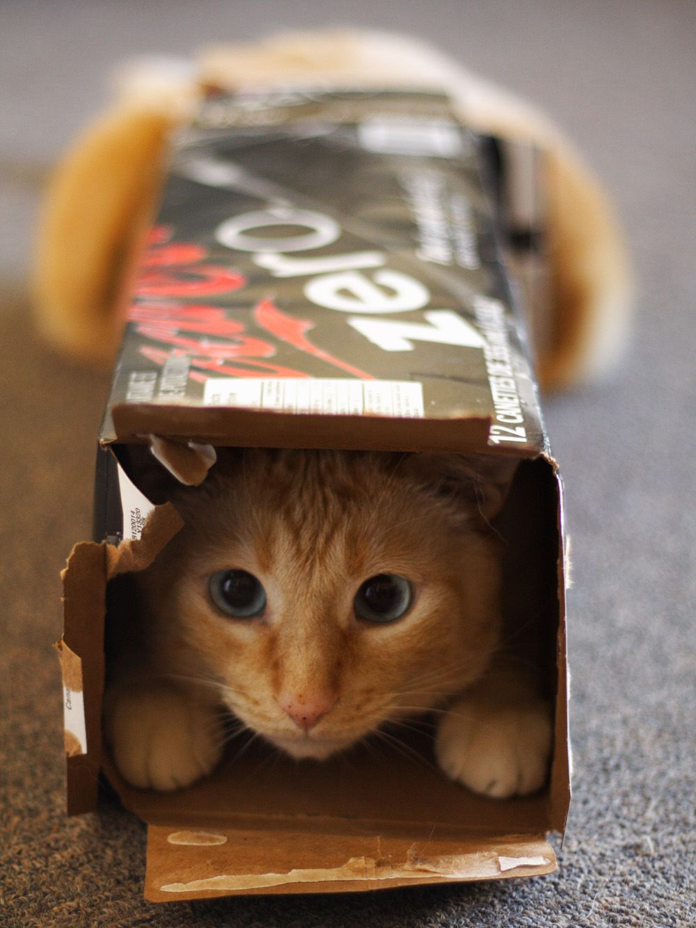Why Do Cats Love Boxes So Much? Cute cats, Funny cat