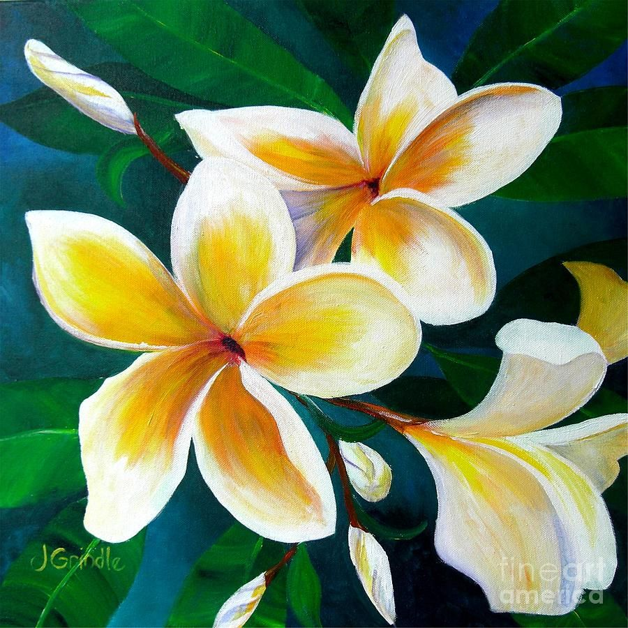 Yellow Plumeria Canvas Print Canvas Art By Jerri Grindle