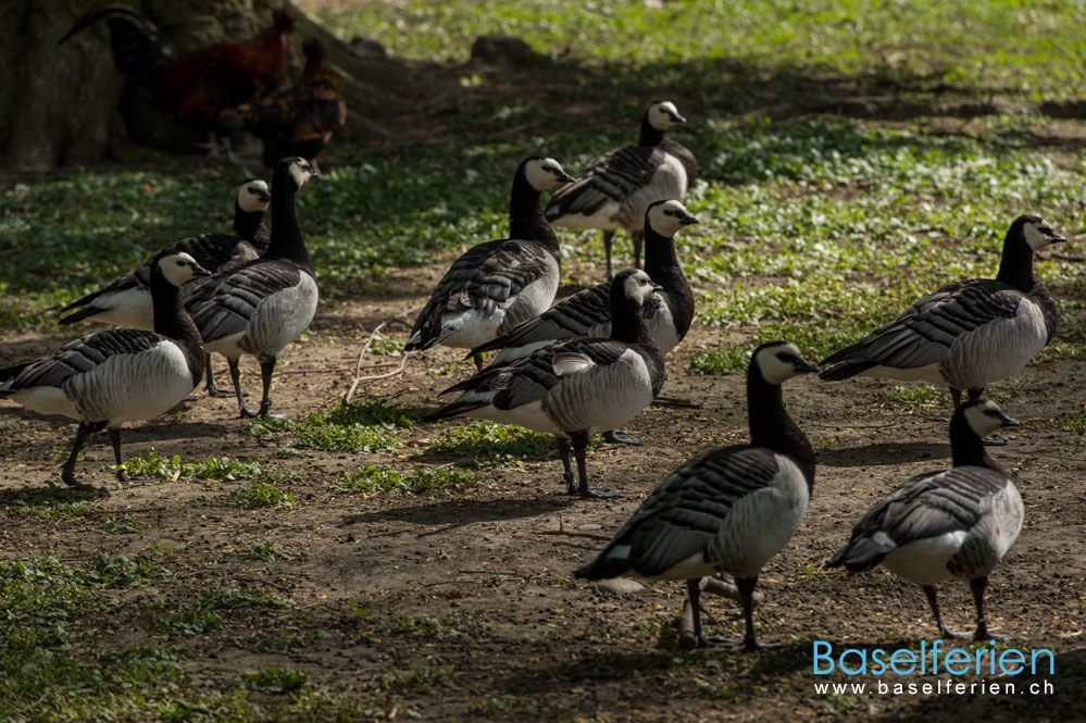 Schönes #Ausflugsziel in #Basel: Tierpark Lange Erlen.