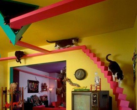casa preparada para gatos