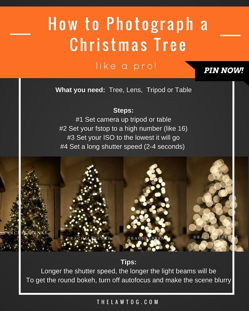 Christmas Tree Farm Lyrics Genius