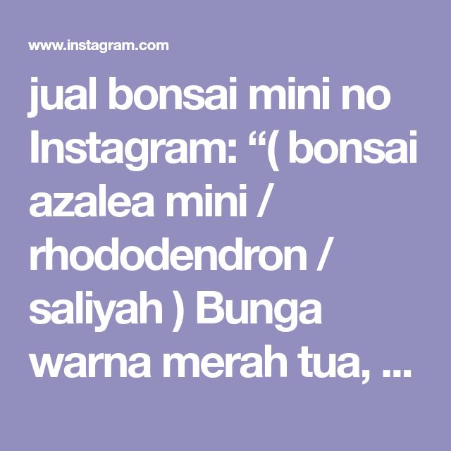 selling Instagram mini no Instagram: