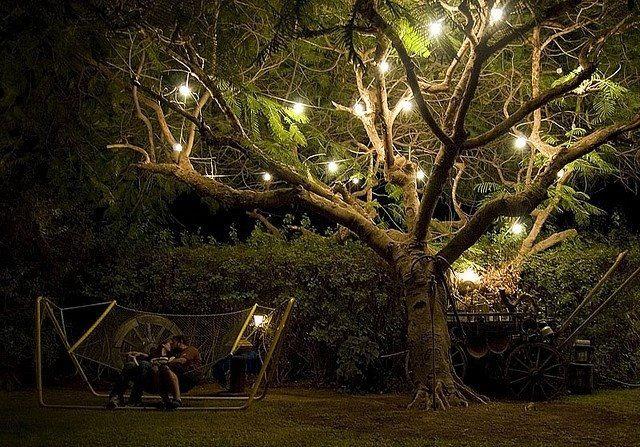 lighting outdoor trees. Outdoor Tree Lights Lighting Trees R