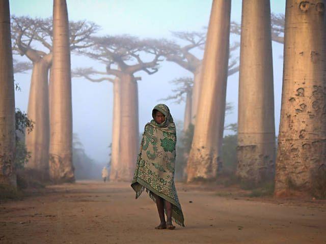 Concurso da 'National Geographic' premia melhores fotos de viagem. A foto de Ken Thorne tirada na costa oeste de Madagascar, perto de Morondava, recebeu um prêmio por mérito.