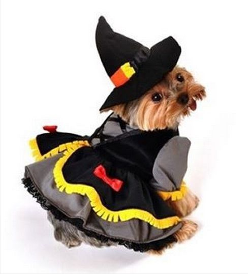 23 Awesome Dog Halloween Costume Ideas [Pictures | Dog ...