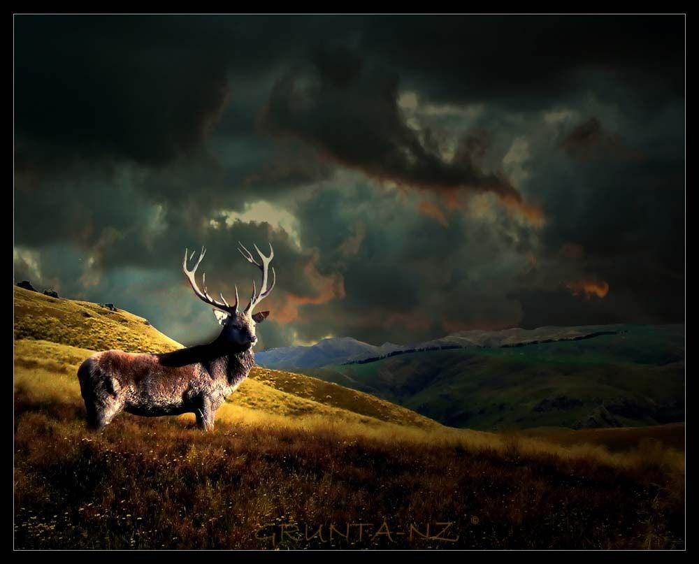 Deer Hunting Wallpapers Best Collection Of Deer Wallpapers on