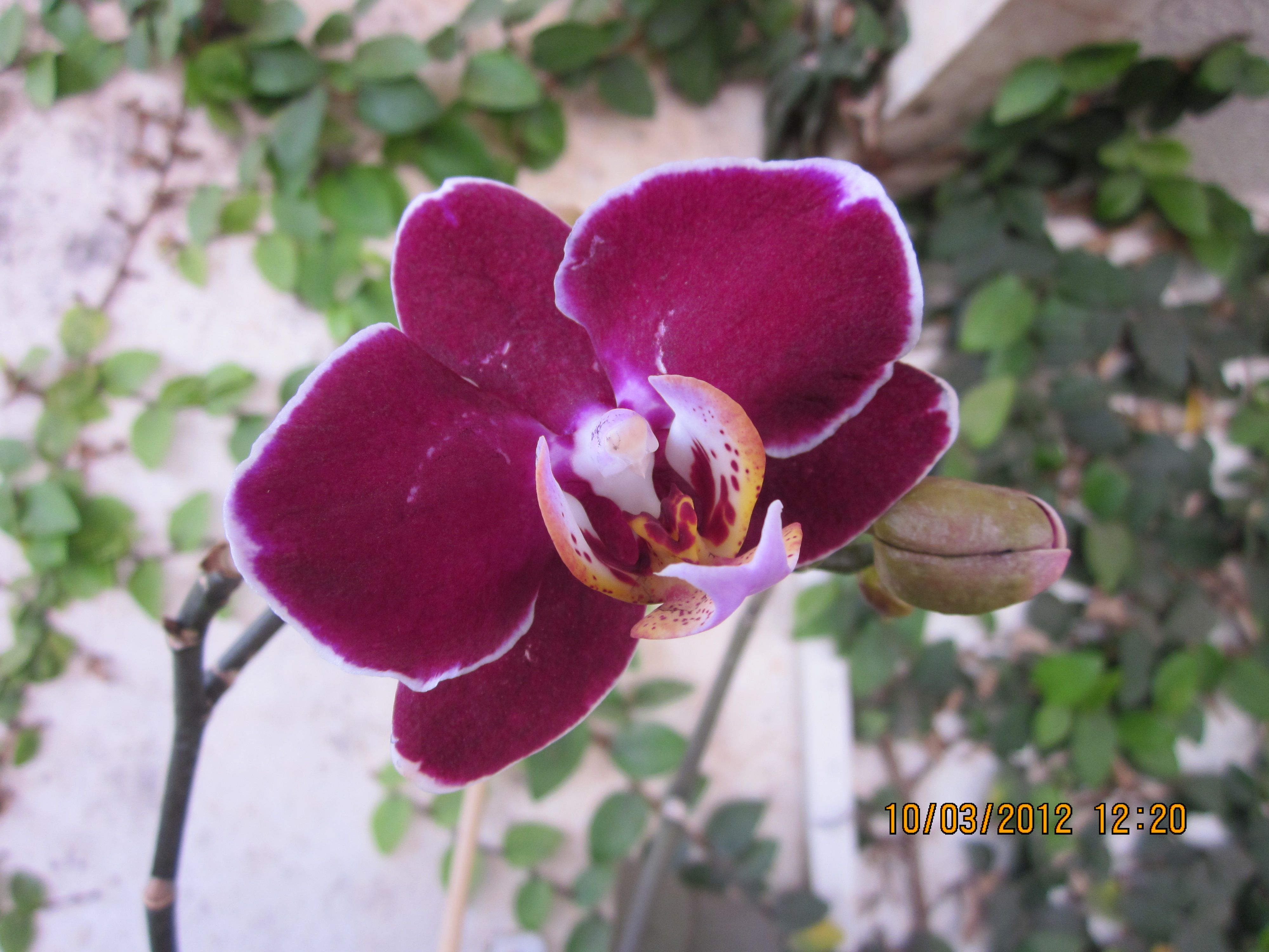 From my orchid garden orchids pinterest orchids garden and orchid