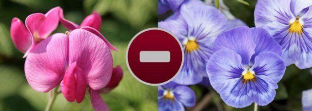 Цветы на клумбе – правильное соседство   Цветы, Цветочный ...