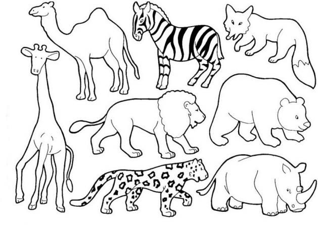 Laminas Animales Domesticos Animados Para Imprimir Imagui Zoo Animals Animal Drawings Animal Illustration