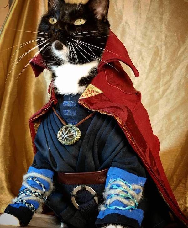 Doctor Strange Cat Sorcerer Supreme Cat Cosplay Cat Costumes Cosplay This brutally honest muscle tee features the. doctor strange cat sorcerer supreme