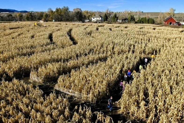 54d5a92ffebfdb6c8a2f93da9774cf32 - Denver Botanic Gardens Corn Maze Hours
