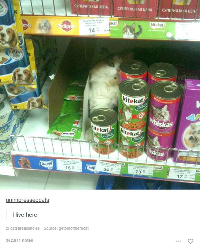 Cat Posts On Tumblr That Are Impossible Not To Laugh At Cat - 20 cat posts on tumblr that are impossible not to laugh at
