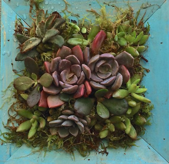 Succulent Frame/Living Wall Art/One of a Kind/Vertical Wall Hanging ...