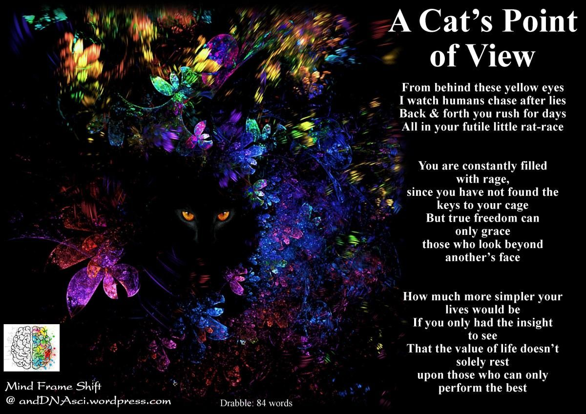 A Cat S Point Of View Short Poem Point Of View Cats Yellow Eyes