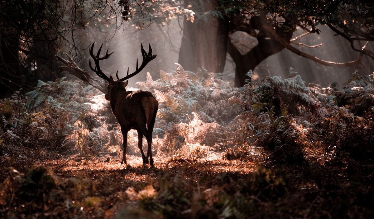 deer tumblr - Google Search