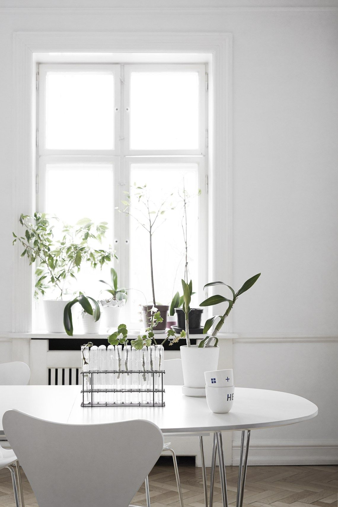 Greens inside of white window sill white rooms and window room dzzzfo