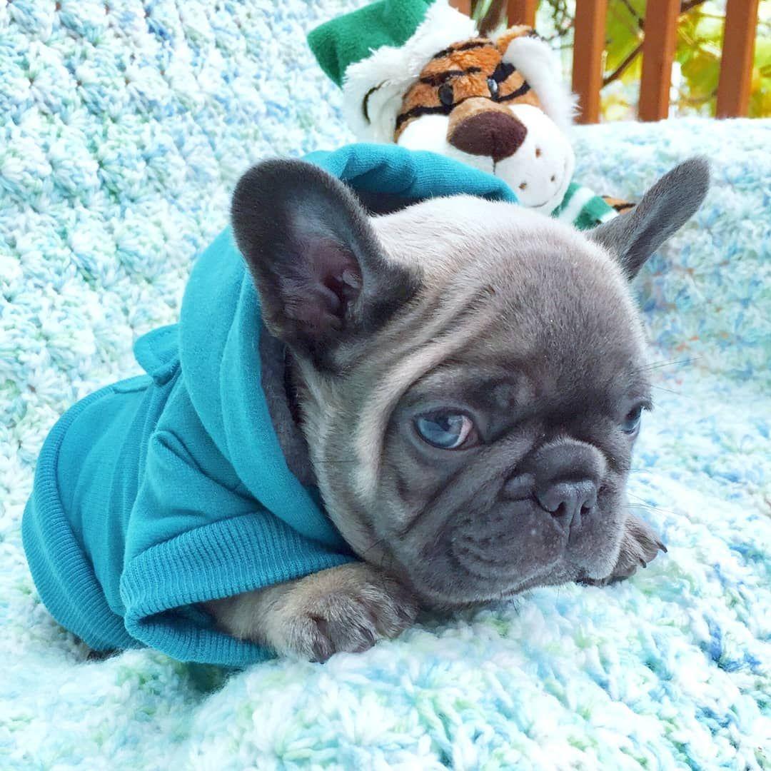 Frenchie World Basic Dog Hoodie Cute French Bulldog French