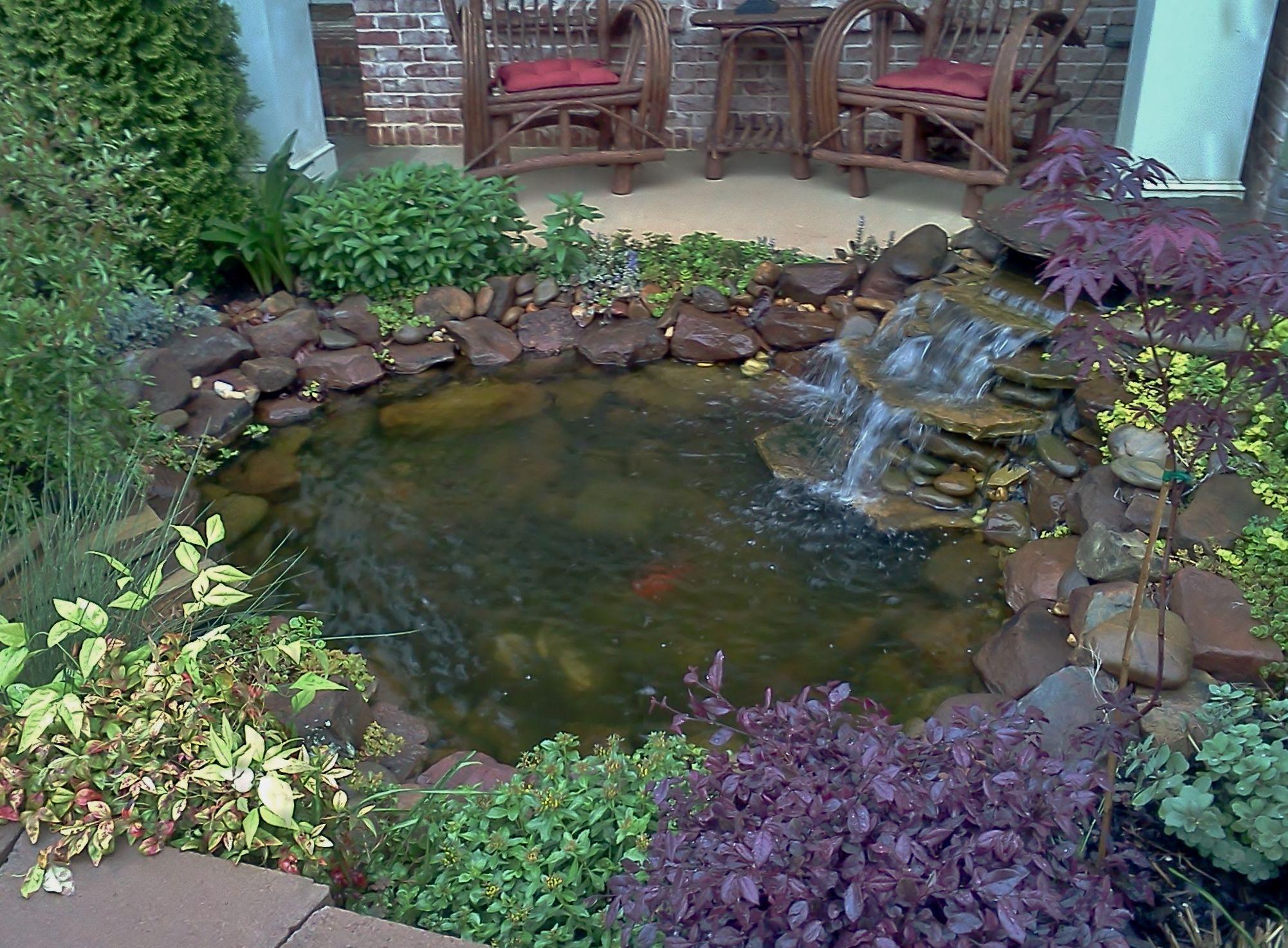 koi pond garden pinterest pond koi and gardens On koi pool singleton