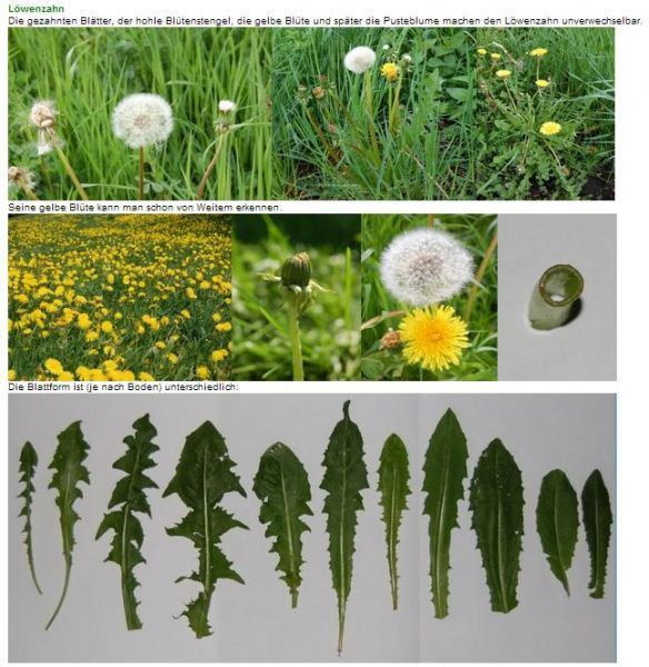 Photo of Picking meadows for beginners